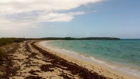 Orörd strand i Kuba med sköljas upp på stranden havsväxt arkivfoto