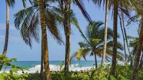 Orörd tropisk strand i Bocas del Toro Panama Arkivfoto