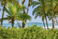 Orörd tropisk strand i Bocas del Toro Panama Royaltyfria Bilder