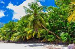 Orörd tropisk strand i Seychellerna royaltyfria bilder