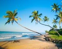 Orörd tropisk strand i Sri Lanka Royaltyfri Fotografi