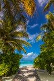 Orörd tropisk strand, Maldiverna strand royaltyfri bild