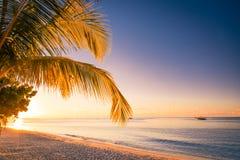 Orörd tropisk strand, Maldiverna strand royaltyfria bilder