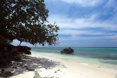 Orörd tropisk strandkustlinje, turkossikt av havswina Arkivfoto