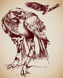 orły Zdjęcie Royalty Free