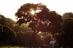 Ora dell'oro nel parco Fotografie Stock
