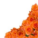 Orabge roses border on white Stock Image