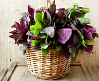Orach Basket Royalty Free Stock Images