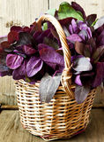 Orach in a Basket Stock Photo