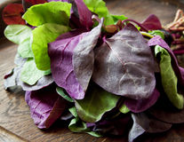 Orach Stock Photography
