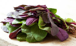 Orach Stock Photos