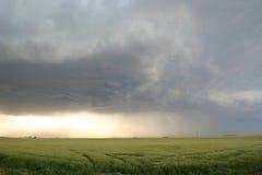 Orage de approche au-dessus de zone de blé Image stock