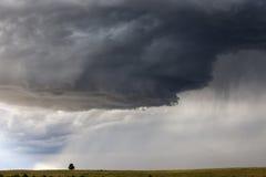 Orage de approche de prairie sur l'arbre solitaire Photographie stock