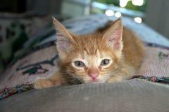 Orage Tabby Kitten Image libre de droits