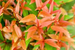 Oragne leaves in the garden Royalty Free Stock Photos