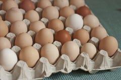 Oragnic鸡蛋 免版税库存照片