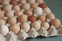Oragnic eggs. Eggs in cardboard box, different sizes and colors, with green background Royalty Free Stock Photos