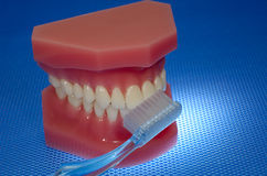 Oral Health. Photo of a Mouth Model and a Toothbrush - Oral Health Related Stock Images