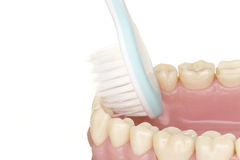 Oral hygiene. Beautiful teeth and toothbrush doing the oral hygiene Royalty Free Stock Images