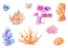 Сoral reef in watercolor. Set of hand-drawn seaweed. Isolated drawing, ocean painting Royalty Free Stock Photos