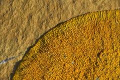 Orance lichen on boulder Royalty Free Stock Photo