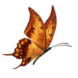 Orang butterfly flying Stock Photos