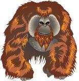 Orang-outan, grande singe de jungle asiatique Indonésie - illustration de vecteur illustration de vecteur