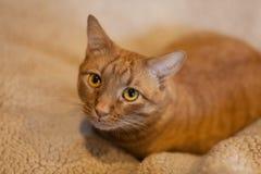 Orang tabby cat on neutral background stock photos