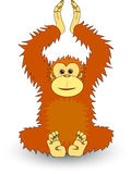 Orang utan Royalty Free Stock Photography
