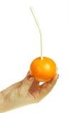 Orange à disposition Photos stock
