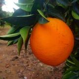 Orange lizenzfreies stockfoto