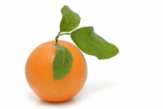 Orange. stock photos
