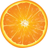 Orange. Juicy orange slice  illustration Stock Photos