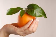An orange Royalty Free Stock Photography