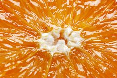 Orange. Royalty Free Stock Photo