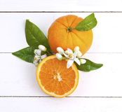 Orange Royalty Free Stock Images