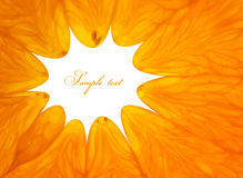 Orange. Background close up for your design Royalty Free Stock Photos