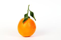 Orange 3 Royalty Free Stock Image