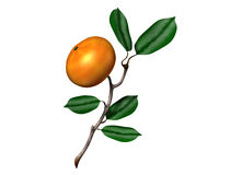 Orange. Bough with one brigth Royalty Free Stock Photography