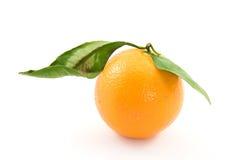 orange Royaltyfri Foto