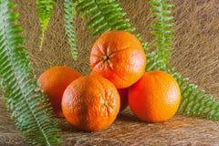 Orange5 Fotografia Stock
