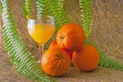 Orange3 Fotografia Stock