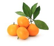 Orange Photo libre de droits