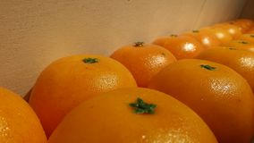 Orange Image stock