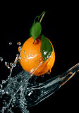 orange Photo stock