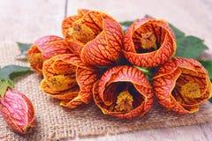 Orange Abutilon Flowers.