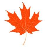 Orange Ahornblatt lizenzfreie abbildung