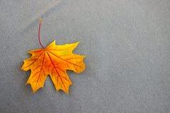 Orange Ahornblatt auf dem grauen Gewebe stockfoto
