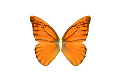 Orange Albatross Butterfly (Appias nero) Stock Photos
