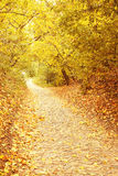Orange alley. Autumnal park/ alley of stone the block Stock Image